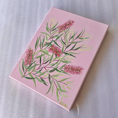 Bottlebrush with Pink Background | 30cm x 40cm