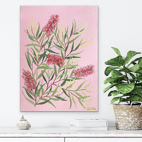 Bottlebrush with Pink Background   30cm x 40cm