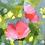 Thumbnail: Blooms on Apple Green | 61cm x 61cm