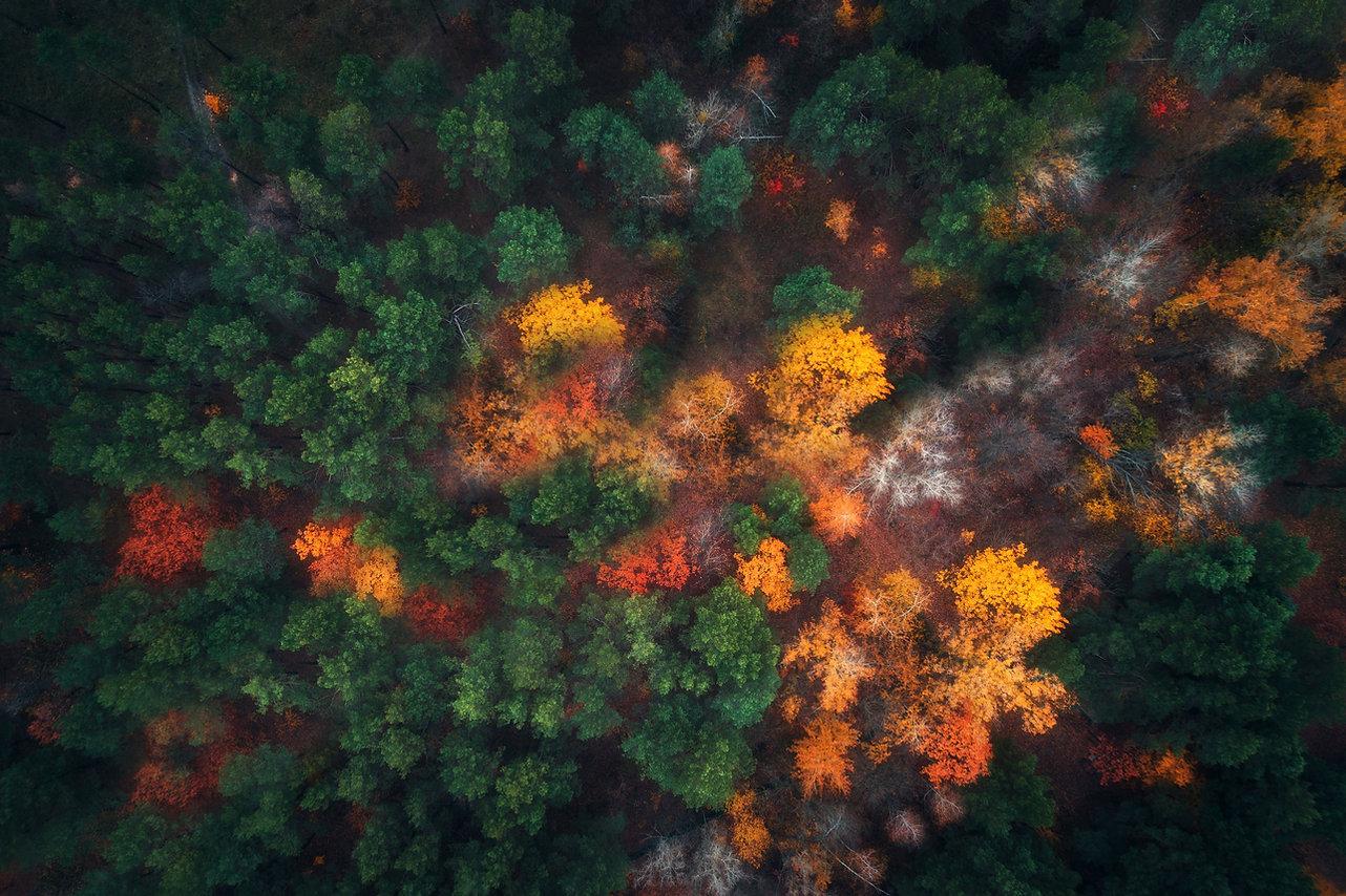 Dubový les