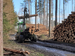 Boj o dřevo. Zásoby z kůrovcové kalamity jsou pryč, roste poptávka i ceny