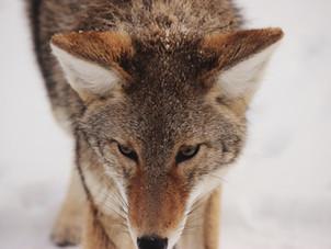 Er du en ugle, ræv eller grævling?, spurgte han!