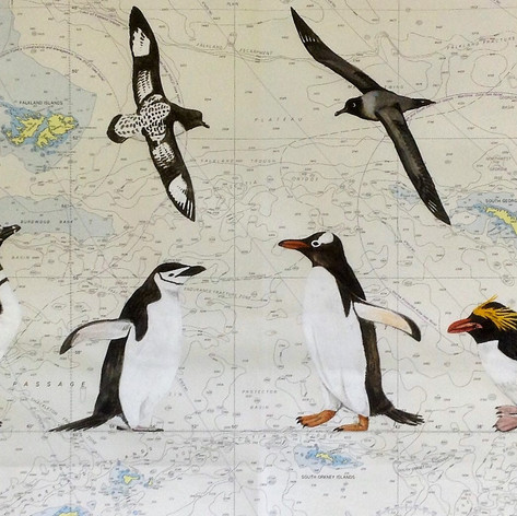 Illustrtaed seachart - Penguins & Seabirds