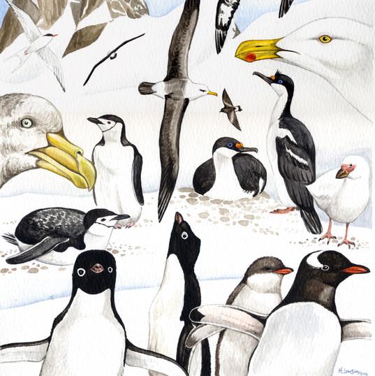 ANTARCTIC PICTURE-BIRDS.jpg