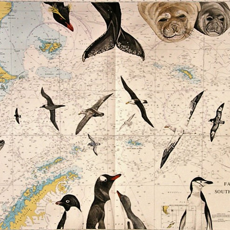 Illustred Seachart - Antartica & South Georgia II