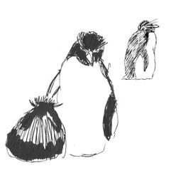 Rockhopper penguin sketch form life