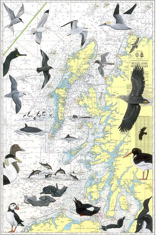 Wildlife of the West Coast of Scotland