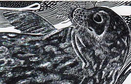 Weddell seal beauty.jpg
