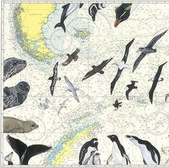 Wildlife of Falklands, South Georgia & Antarctica