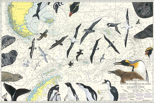 Wildlife of Falklands, South Georgia & Antarctica print