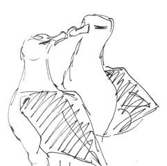 Black-browed Albatross pair - sketch from life