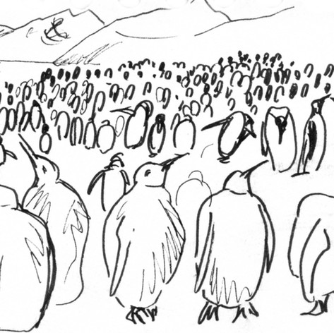 King penguin colony sketch from life