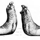 Elephant seals.jpg