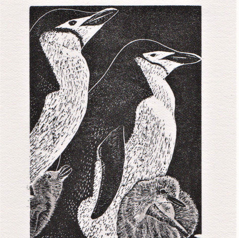 Limited edition wood engraving
