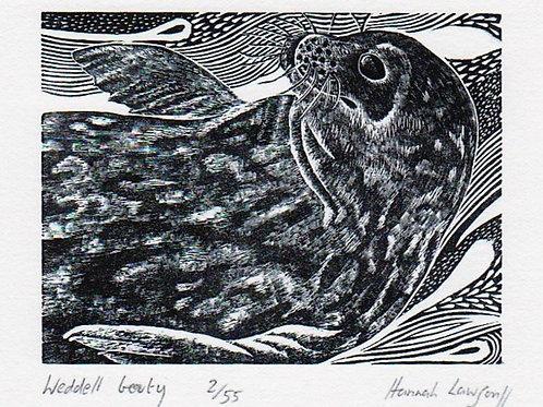 Weddell seal beauty