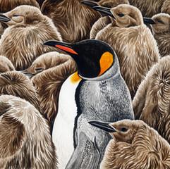 Adult amongst the chicks - King penguins
