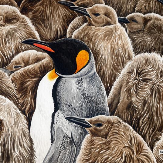 adult amongst chicks-King Penguin.jpg