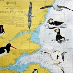 Illustred Seachart - Scotland East Coast