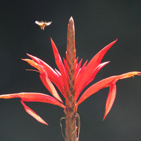 red flower and bug