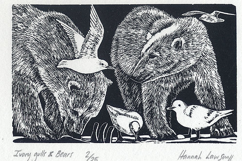 Ivory gull & Bears