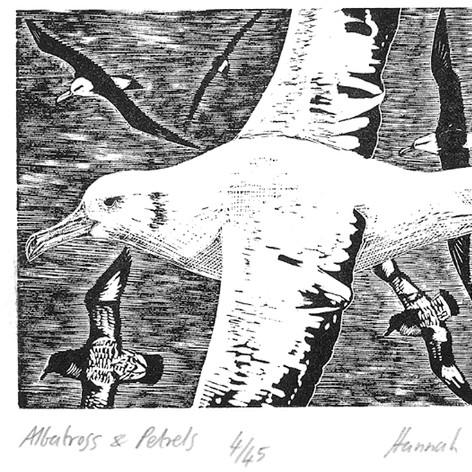 Albatross & Petrels
