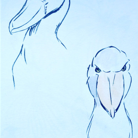 shoebilled stork