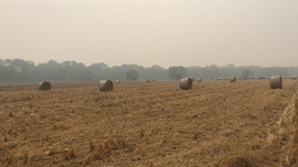 Round bales on the field before collection