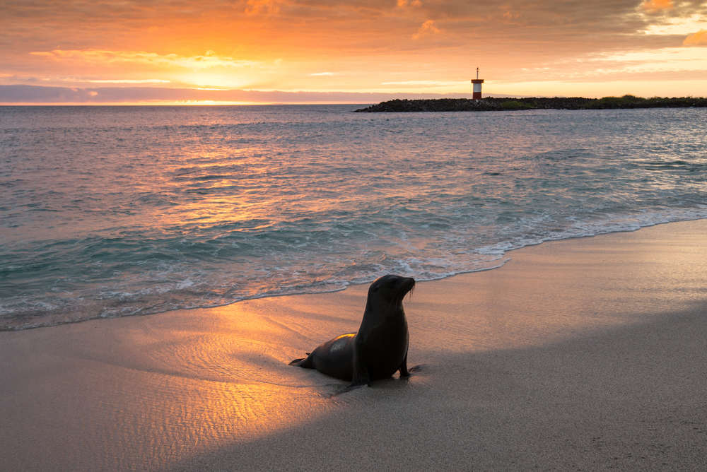 sea-lion-sunset-san-cristobal-galapagos-