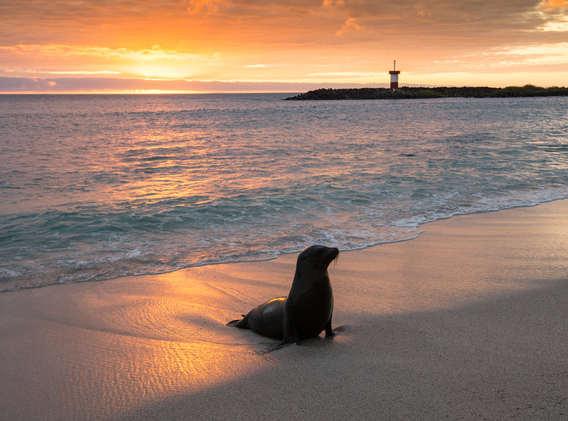 sea-lion-sunset-san-cristobal-galapagos-