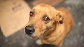 Major Laws Against Animal Cruelty In India