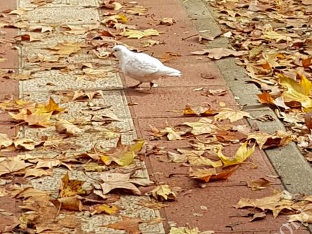 The Silence of the Birds - Das Schweigen der Vögel