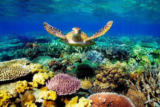 Beautiful Turtles Tours