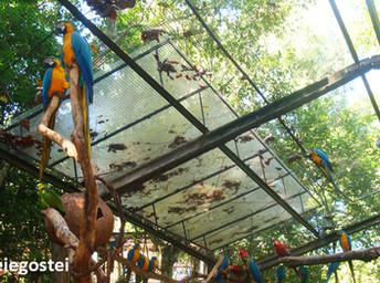 Parque das Aves surpreende e encanta quem viaja a Foz do Iguaçu