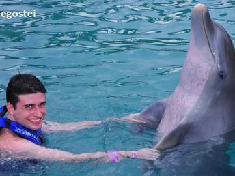 Onde nadar com os golfinhos em Cancún