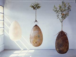 Cápsula orgânica transforma pessoas falecidas em árvores.