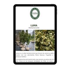 Portafolio vipa mailing.png