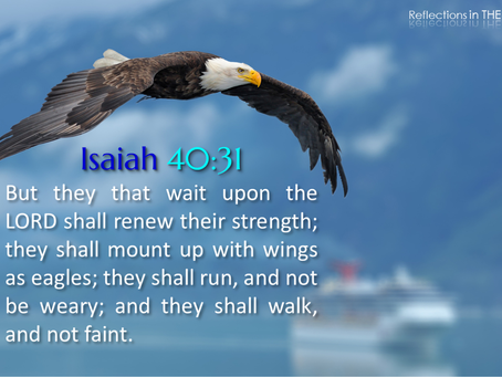 Soar in the Waiting