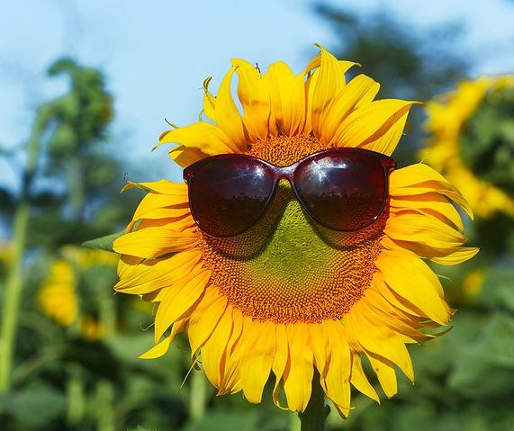 sunflower_small_size.jpeg