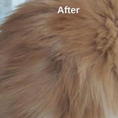 ולנטינה גליק - טיפול הומאופתי בחתול עם אלופציה.