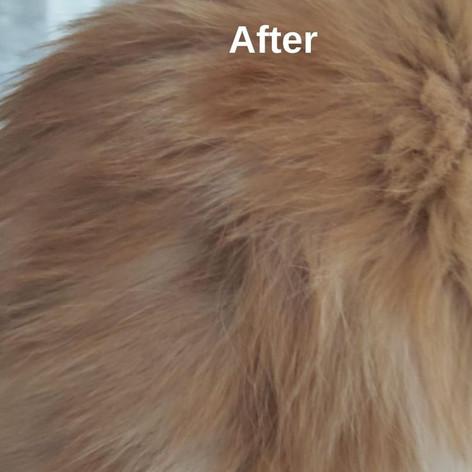 Валентина Глик - Гомеопатическое лечение кошек с алопецией.
