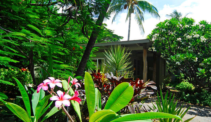 The home situated among Plumeria trees
