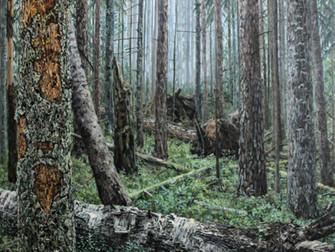 Rägastikud, Metsik paradiis ja Metsamorfoos Paldiskis