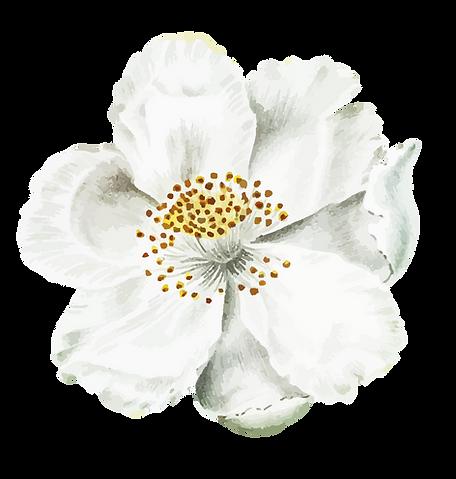 Flores-02.png