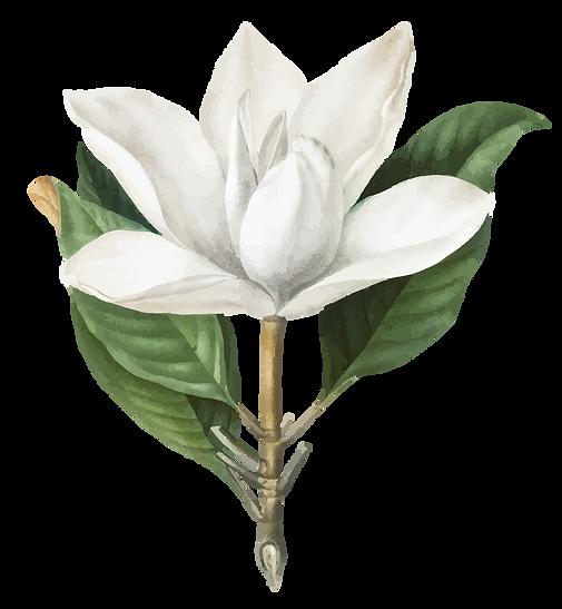Flores-07.png