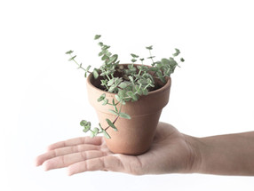 Stuck indoors? Time to propagate!