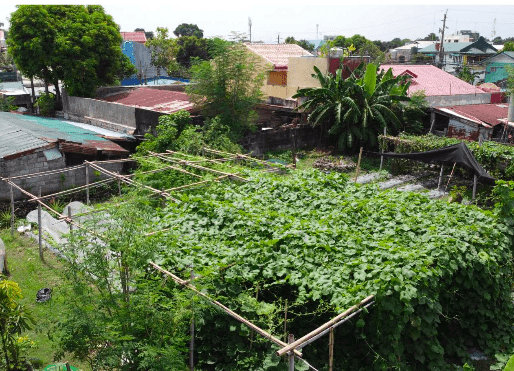 Food security through urban agriculture