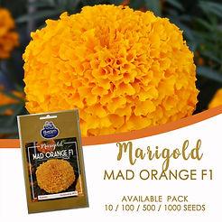 MARIGOLD MAD ORANGE F1.jpg