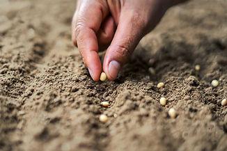 psia-hand-planting-soy-seed-vegetable-ga