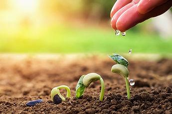 psia-hand-farmer-watering-small-beans-ga