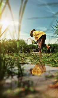 psia-farmer-work-rice-field.jpg